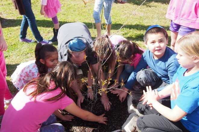 Planting pomegranate tree for Tu B'Shevat